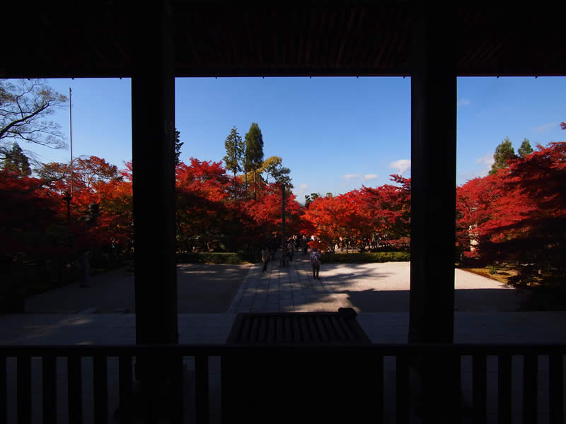 京都 禅林寺 永観堂の紅葉(Autumn leaves of Eikando-Zenrinji temple in Kyoto,Japan)