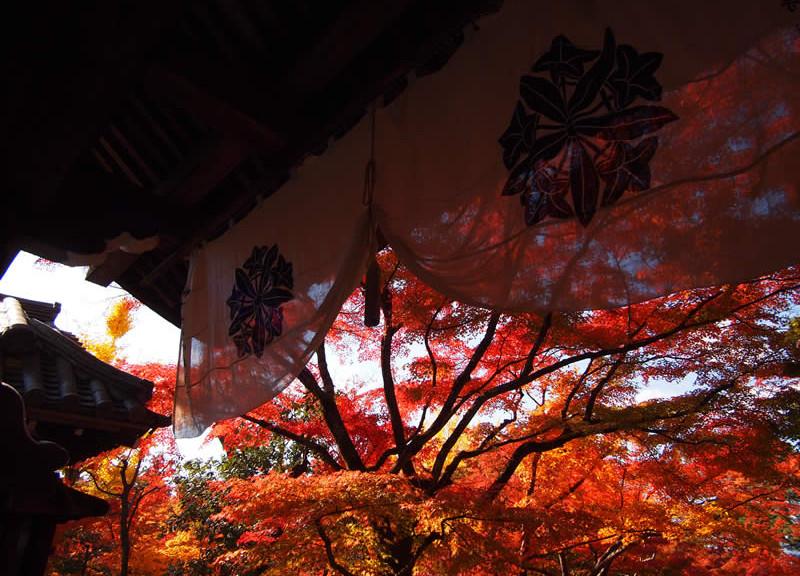 京都 禅林寺 永観堂の紅葉(Autumn leaves of Eikando-Zenrinji temple in Kyoto,Japan)