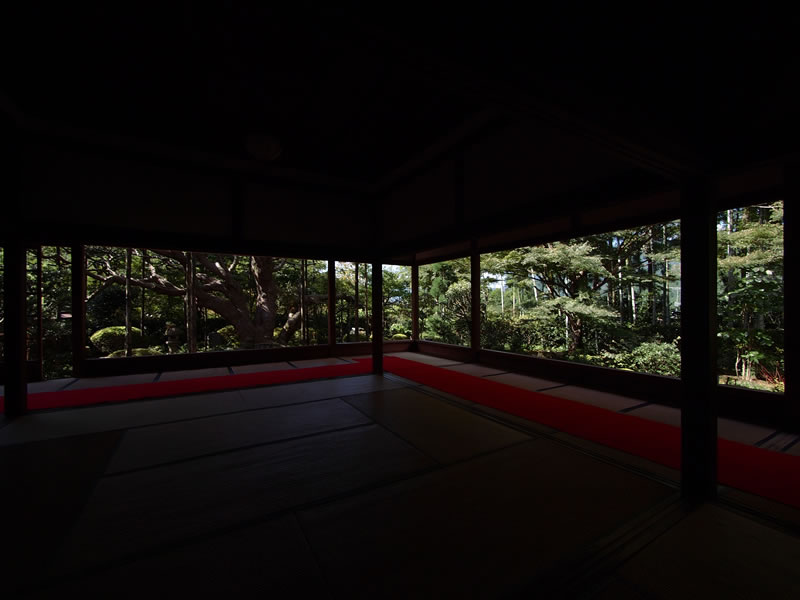 京都 大原 宝泉院 五葉の松