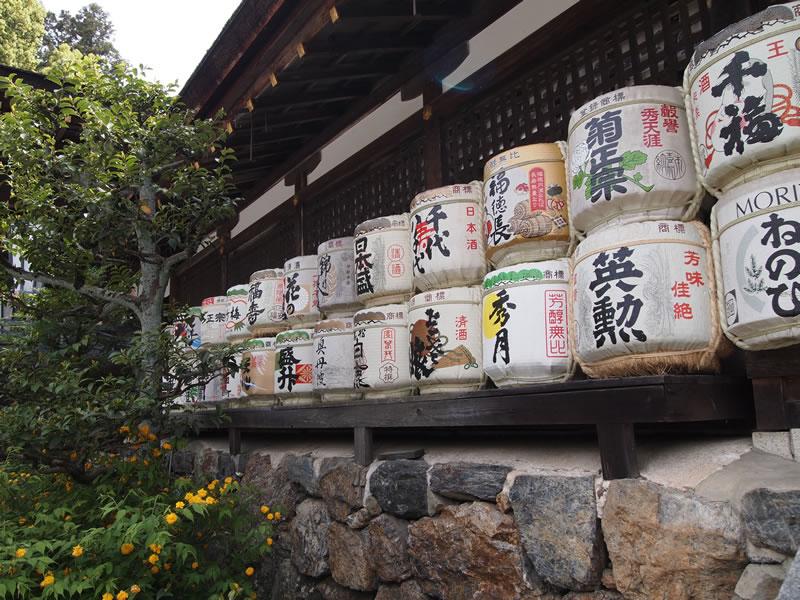 京都 松尾大社の山吹