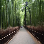 京都 竹林の道(Bamboo grove road in Kyoto,Japan)