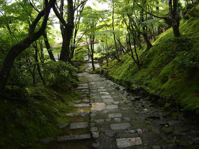深緑の常寂光寺