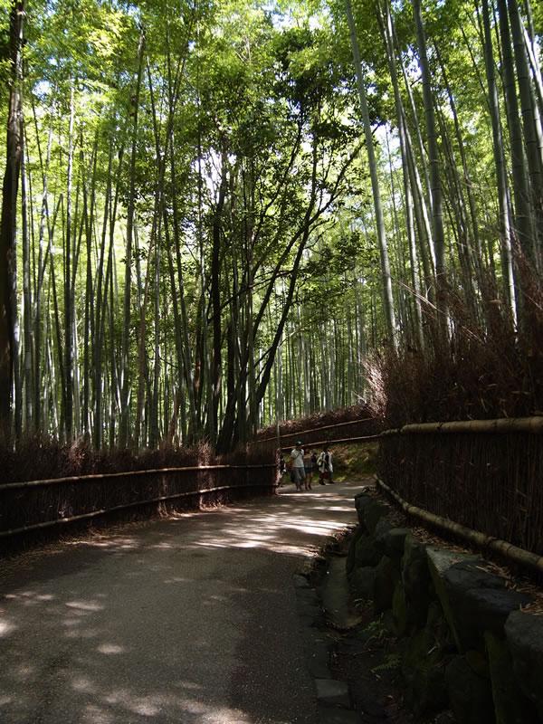 京都 嵐山 竹林の道