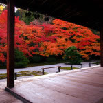 京都 南禅寺塔頭 天授庵の紅葉(Autumn leaves of Tenjyuan Nanzenji temple in Kyoto,Japan)