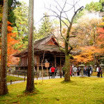 京都 大原 三千院門跡の紅葉(Autumn leaves of Sanzenin-monzeki temple in Kyoto,Japan)