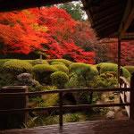京都 詩仙堂 丈山寺の紅葉(Autumn leaves of Shisendo-Jyozanji temple in Kyoto,Japan)
