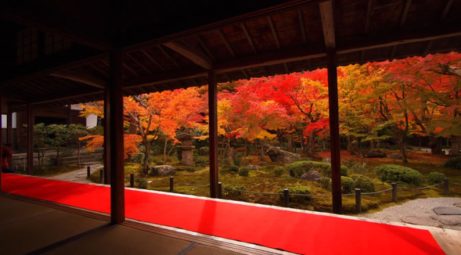 京都 圓光寺の紅葉(Autumn leaves of Enkouji in Kyoto,Japan)