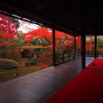 京都 妙心寺塔頭 大法院の紅葉(Autumn leaves of Daihoin Myoshinji temple in Kyoto,Japan)