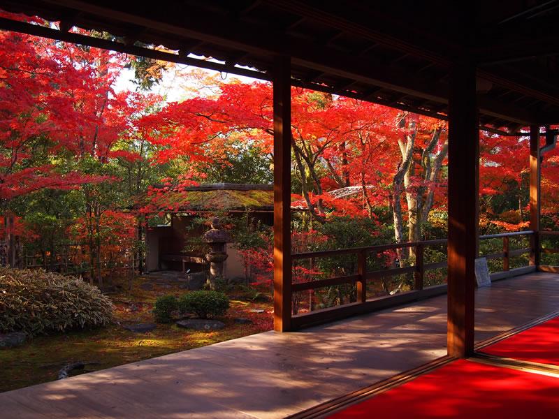 妙心寺塔頭 大法院の紅葉