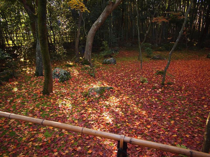高桐院の紅葉