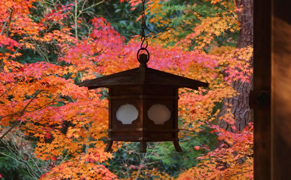 京都 大徳寺塔頭 高桐院の紅葉(Autumn leaves of Kotoin Daitokuji temple in Kyoto,Japan)