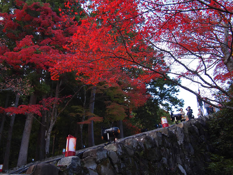 京都 高雄 神護寺の紅葉(Autumn leaves of Jingoji temple in Kyoto,Japan)