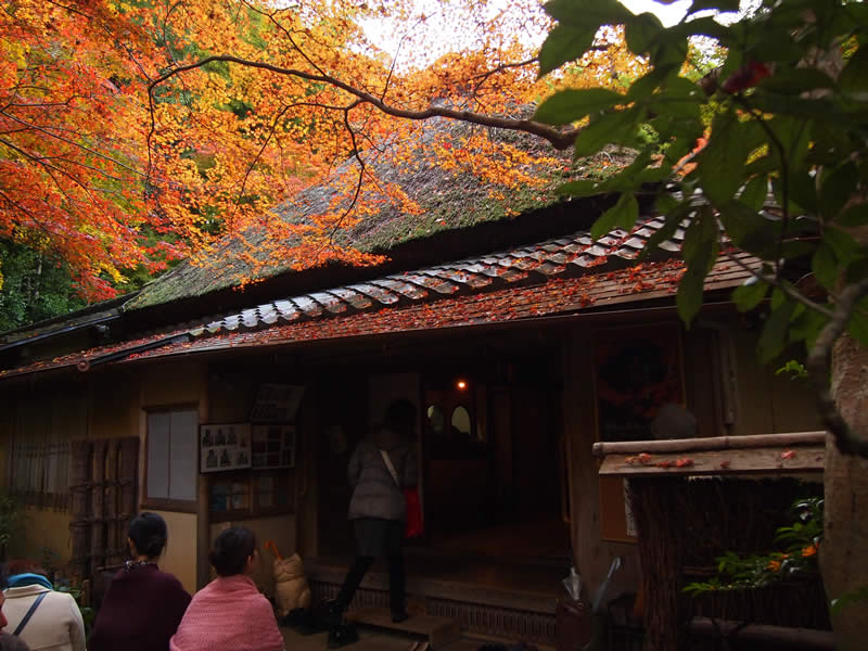 京都 祇王寺の紅葉(Autumn leaves of Giouji temple in Kyoto,Japan)