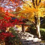 京都 大原 寂光院の紅葉(Autumn leaves of Jakkoin temple in Kyoto,Japan)