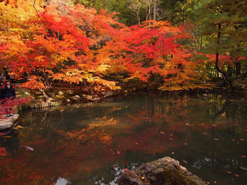京都 南禅寺塔頭 天授庵の紅葉(Autumn leaves of Tenjyuan Nanzenji temple in Kyoto,Japan)