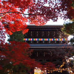 京都 金戒光明寺の紅葉(Autumn leaves of Konkaikoumyoji temple in Kyoto,Japan)
