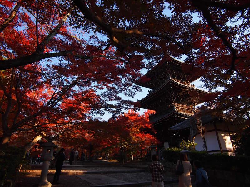 京都 真如堂 / 真正極楽寺の紅葉(Autumn leaves of