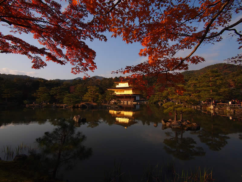 京都 金閣寺の紅葉(Autumn leaves of Kinkakuji temple in Kyoto,Japan)