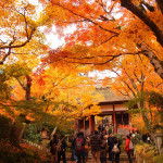 京都 嵯峨野 常寂光寺の紅葉(Autumn leaves of Jojakkoji temple in Kyoto,Japan)