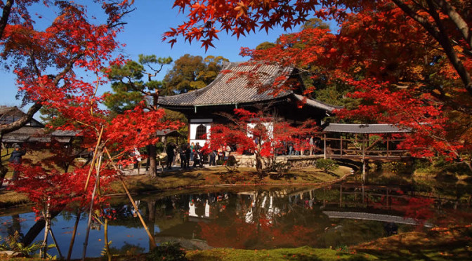 京都 高台寺の紅葉(Autumn leaves of Koudaiji temple in Kyoto,Japan)