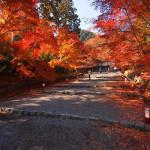 京都 嵯峨野 二尊院の紅葉(Autumn leaves of Nisonin temple in Kyoto,Japan)