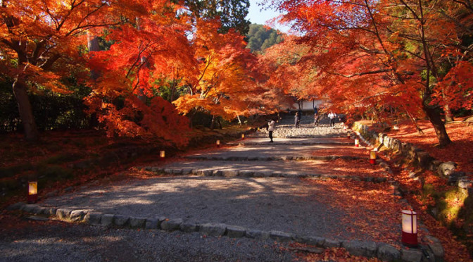 京都 嵯峨野 二尊院の紅葉(Autumn leaves of Nisonin temple in Kyoto,Japan)